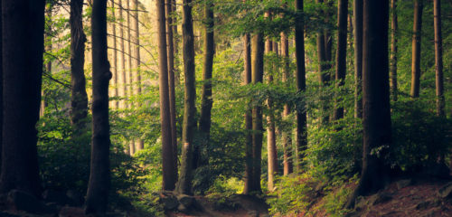 forest with trees